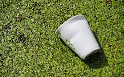 A polystyrene cup